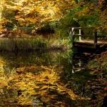 Márton-nap Budakeszi 2021. Várjuk a Budakeszi Arborétumban