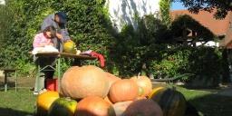 Október 23-i ünnepi hétvége Mór 2020. Családi és ünnepi programok szállással az Öreg Prés Fogadóban
