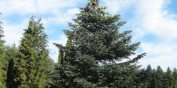 Neszmélyi Arborétum