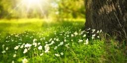 Tápiószelei Agrobotanikus kert