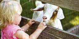 Kecske simogató farmlátogatás és történelmi kalandpark állatos programokkal a Garabonciás Farmon