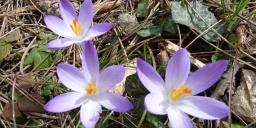 Botanikus Kert Sopron Egyetemi Élő Növénygyűjtemény