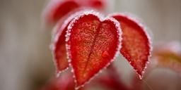 Romantikus téli túra a Tisza-tavon, wellness pihenéssel a Tisza Balneum Hotelben