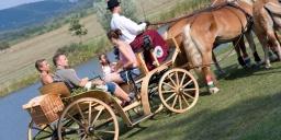 Wellness szállás Fejér megyében, családi üdülés lovaskocsikázással a Hétkúti Wellness Hotelben
