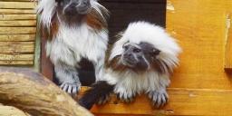 Győri Állatkert programok 2021. Látogatás az állatkertbe
