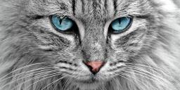 Nemzetközi macskakiállítás 2021 Győr