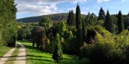 Agostyáni Arborétum látogatás Tatán, séta a fenyők erdejében
