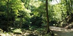 Cuha-völgyi pihenőpark és erdei tanösvény