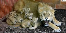 Fővárosi Állat- és Növénykert Budapest Zoo