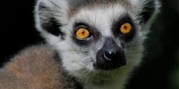 Miskolci Állatkert és Kultúrpark programok 2020