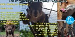 Látványetetés  a Körösvölgyi Látogatóközpont és Állatparkban 2020