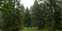 Szigligeti Arborétum