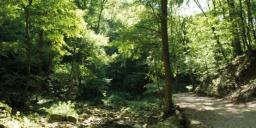 Cuha-völgyi pihenőpark és tanösvény túra