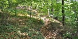 Vén fák tanösvény, találkozás hazánk legnagyobb erdei fenyőjével a Duna-Dráva Nemzeti Parkban
