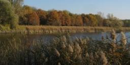 Töreki tavak tanösvény, gyalogtúra a Siófok - Töreki természetvédelmi tanösvényen