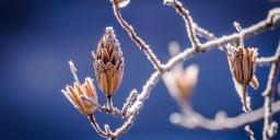 Tihany Trail 2021. A téli terepfutás