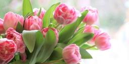 Nőnapi virágvásár a gödöllői Pálmaház Kertészetben 2021