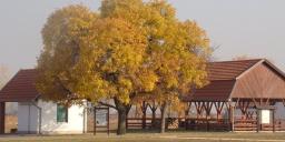 Ködvirág Erdei Iskola