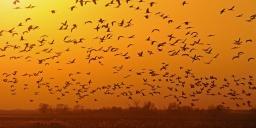 Magyar Nemzeti Parkok Hete 2021. Természetközeli programok a Körös-Maros Nemzeti Parkban