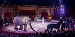 NyÍregyháza cirkusz 2021. Richter Flórián Cirkusz