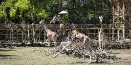 Nyíregyháza állatkerti kedvezmény 2021. Idősek Napja