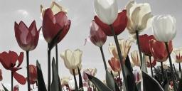 Virághagyma Vásár 2021. Szőlősgyörök