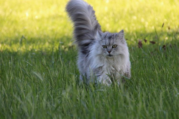 Nyaralás macskával vidéki wellness szállodánkban, Móron