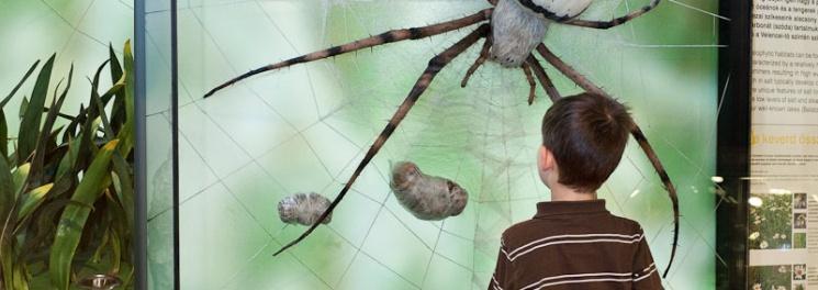 Sokszínű ÉLET - Felfedező úton Magyarország tájain, állandó kiállítás a Természettudományi Múzeumban