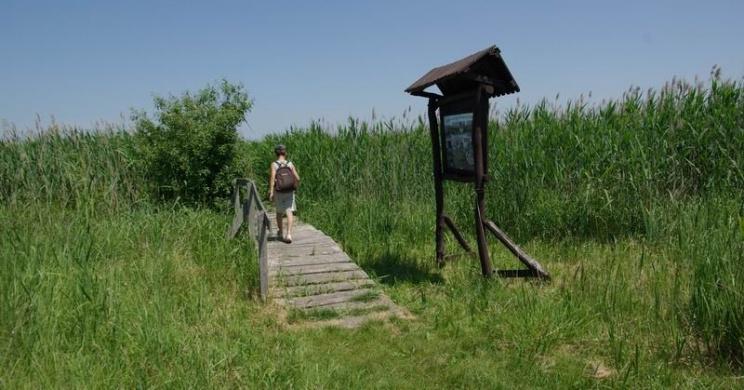 Kékbegy tanösvény Farmoson, ökotúra a Tápió-vidékén, a Duna-Ipoly Nemzeti Parkban