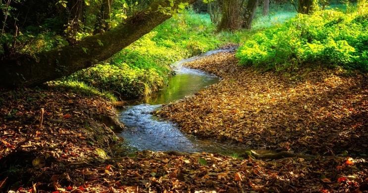 Királyvölgyi Természetvédelmi Tanösvény, ökotúra az Irottkői Natúrparkban