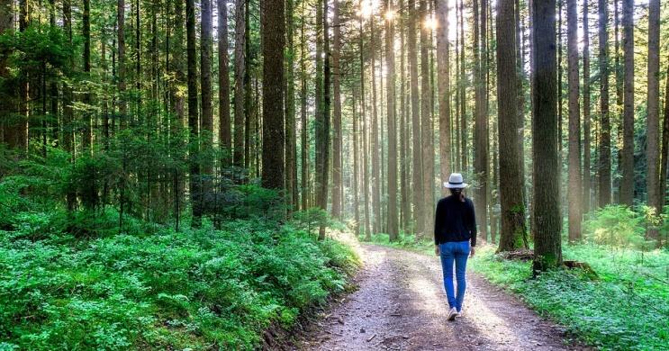 Erdei túra Sopronban, ingyenes garantált séták minden szombaton