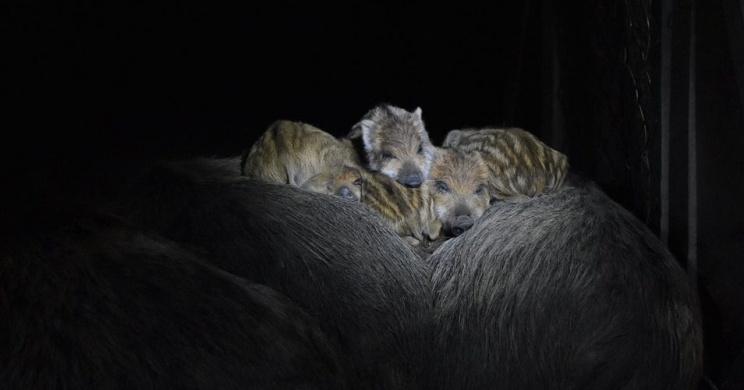 Állatkertek Éjszakája Budakeszi Vadaspark 2020