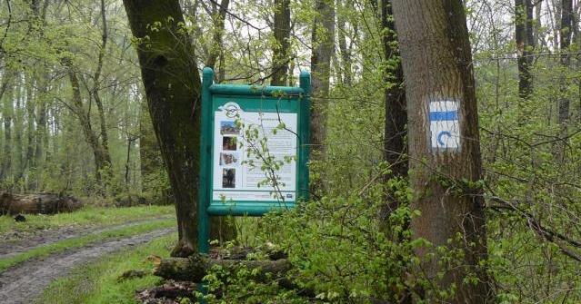 Bárányfoki tanösvény, ökotúra a  Gemenci erdőkben