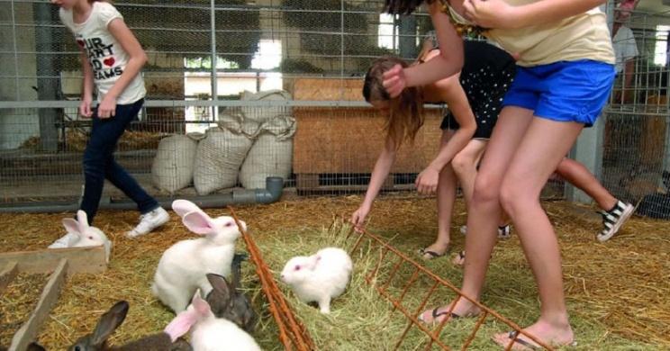 Nyuszisimogató és etetés a Garabonciás Farmon