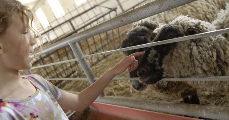 Garabonciás Farm, látogatás Zalakaros mellett egy működő parasztgazdaságban