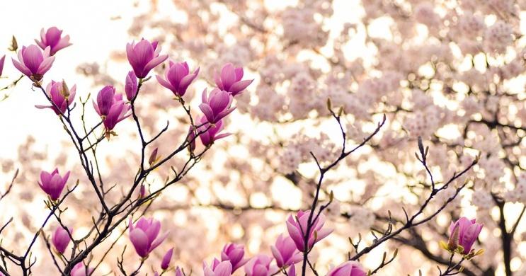 Wellness tavaszi szünet, különböző akciós szolgáltatásokkal a balatonfüredi Anna Grand Hotelben