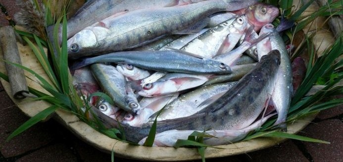 Garda Fesztivál 2020. Gardália, a látott hal ünnepe Tihanyban