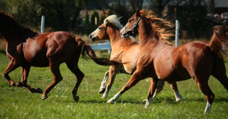 Red Horse Ranch Pátka