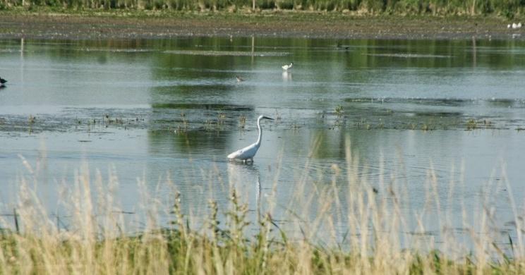 Madárles a Fertő-Hanság Nemzeti Parkban