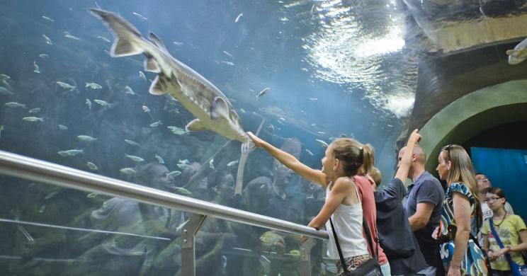 Poroszlói programok 2021. Fesztiválok, rendezvények, események a Tisza-tónál