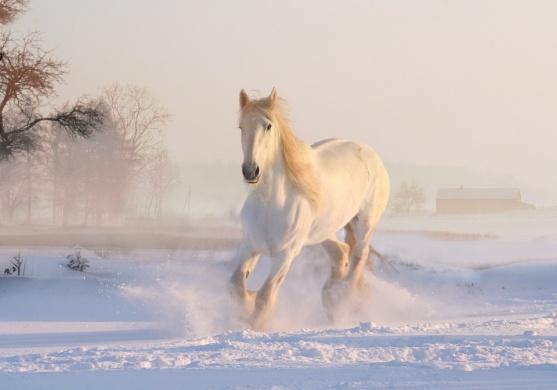 Az Arany Ló 2019. Keleti lovas show az Arénában, online jegyvásárlás