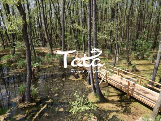Tatai  Fényes Tanösvény - Ökotúra a  vadregényes láperdőben