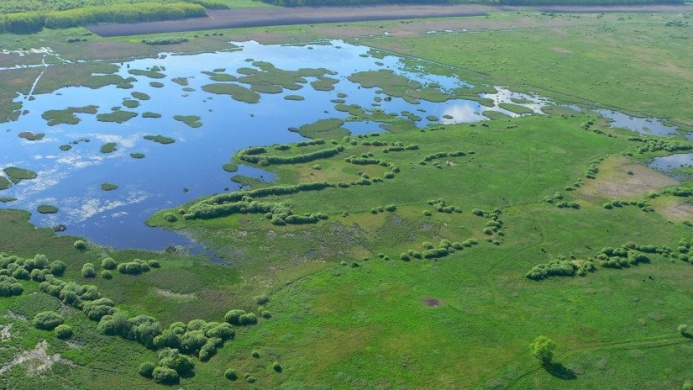 Búbos vöcsök tanösvény, ökotúra a Kis-Balatonnál a Kányavári-szigeten