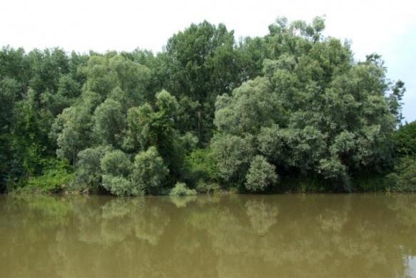 Kormorános-erdő tanösvény, ökotúra a Dráva-völgyében, a Duna-Dráva Nemzeti Parkban