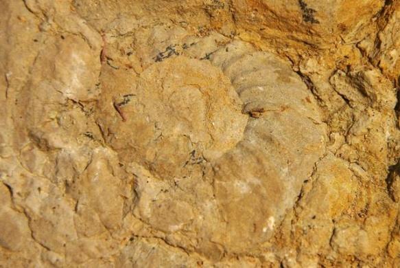 Ammonitesz tanösvény, geotúra a villányi Mészhegyen