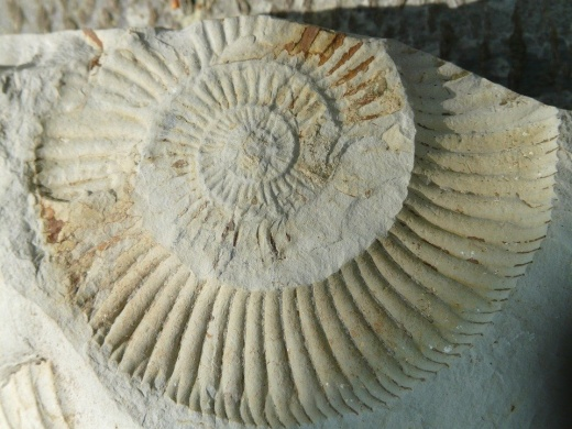 Ammonitesz tanösvény