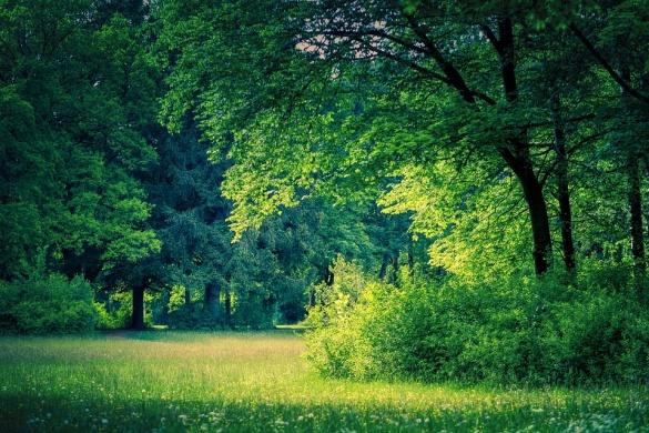 Diósjenői erdészeti tanösvény