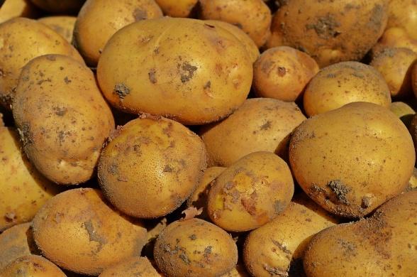 Burgonya vásár 2021. Ültetni való burgonya vásár Tégláson
