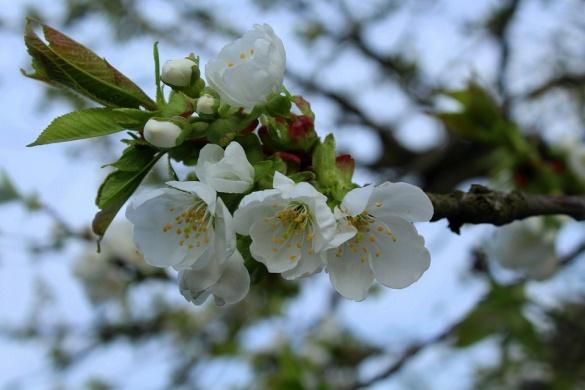 Tavaszi fesztiválok