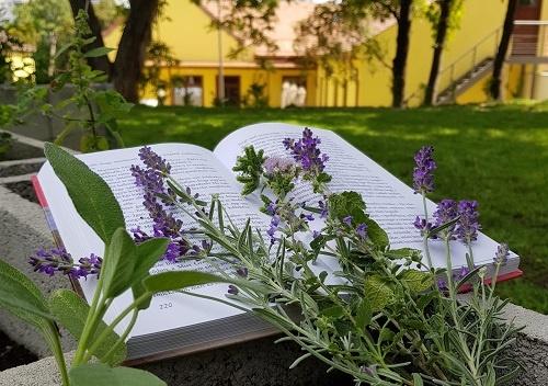 Óbudai Platán Könyvtár programok. Könyvtári események, rendezvények